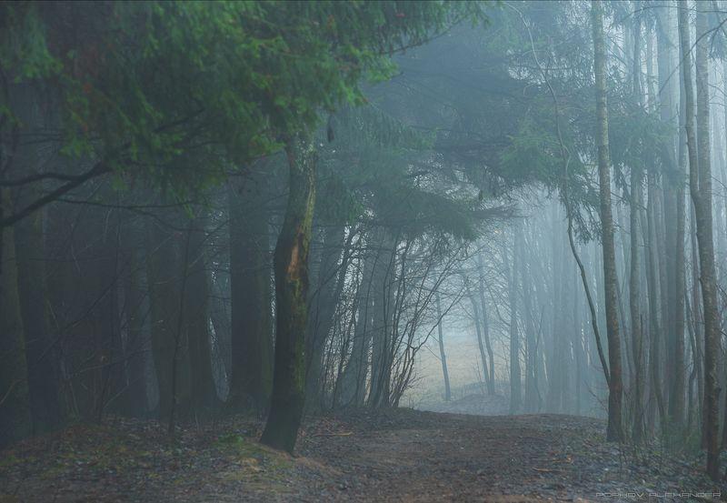 весна март деревья лесопарк медвежино облака беларусь сухарево запад-3 туман рассвет парк градиент тональная перспектива hdr ель 2017 Туманным весенним утромphoto preview