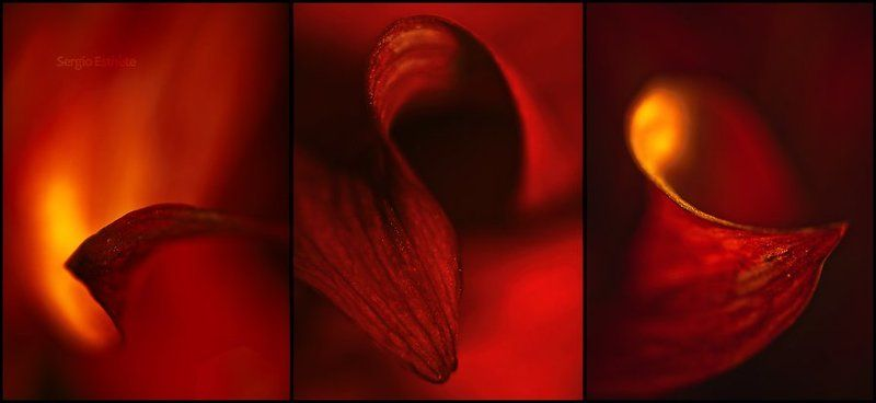 цветы, макро Георгин. Триптихphoto preview