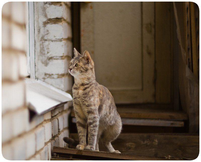 кошки, коты А что это вы там делаете?photo preview