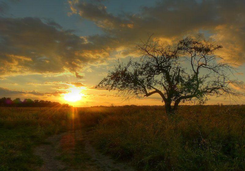 пейзаж, закат, облака, дерево, дорога photo preview