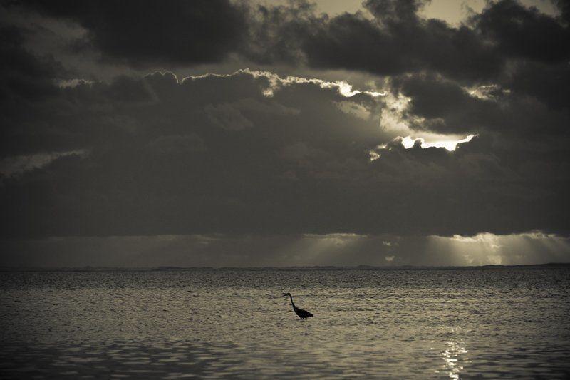 bird, sunrise, dawn Zanzibar at dawnphoto preview