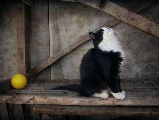 Про котенка и желтый мячик