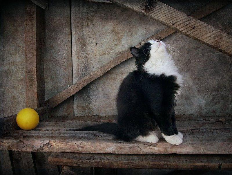 Про котенка и желтый мячикphoto preview