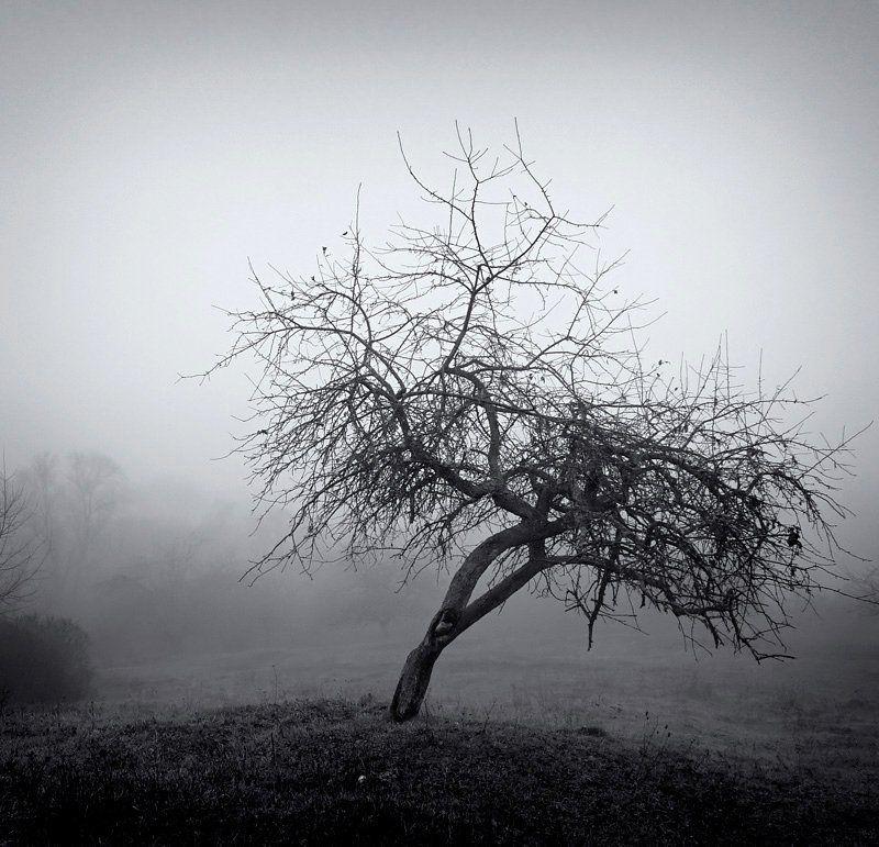 природа, дерево, туман Одно из множестваphoto preview