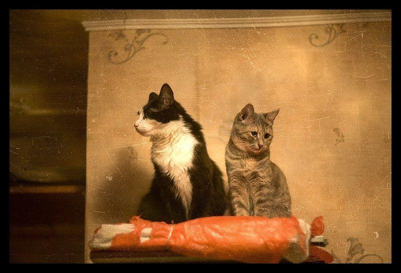 коты, кошки Первое свидание.photo preview