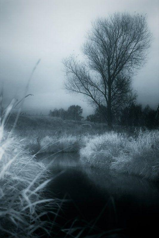 дерево, река, тонирование, осень, трава одиночество№2photo preview