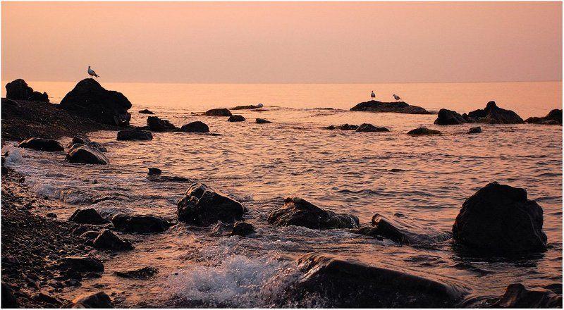 утро, рассвет, восход, берег, чайки, море_черное До восхода Солнца семь минутphoto preview
