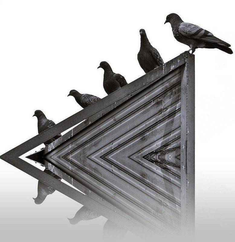 городские, птицы, голуби Городские птицыphoto preview