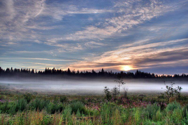 туман, утро photo preview