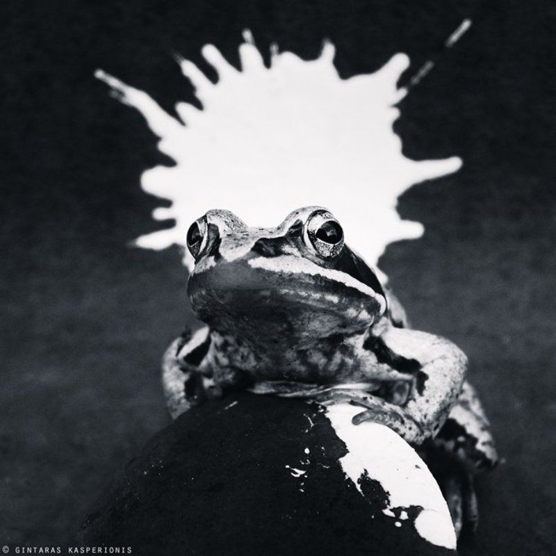 frog, crown, paint Monarchphoto preview
