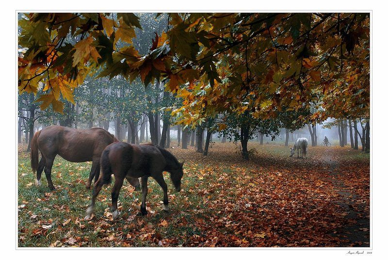 лошадь,осень,велосипед,дендрарий photo preview