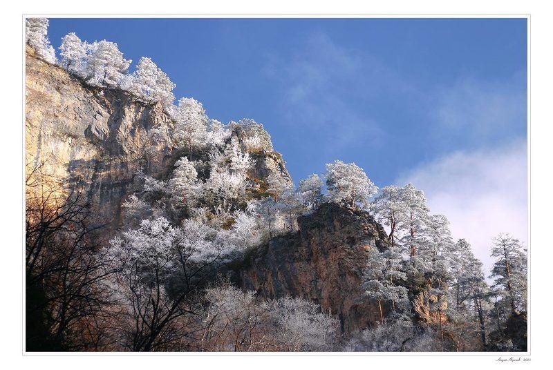 иней,деревья,гуамское ущелье,мороз,утро Сереброphoto preview