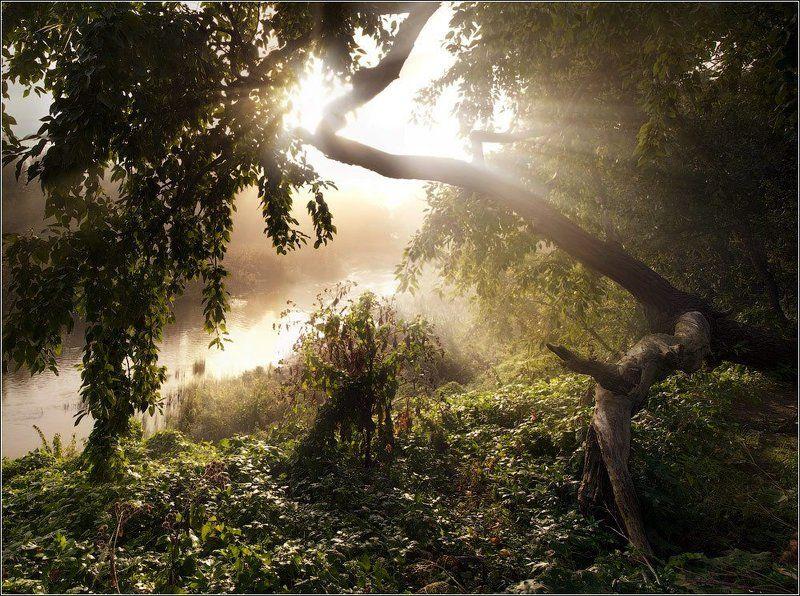 Свет туманного утраphoto preview