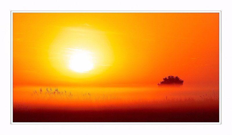 закат,туман,дерево Хайкуphoto preview