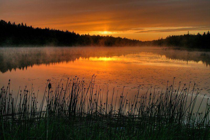 рассвет Утро туманноеphoto preview