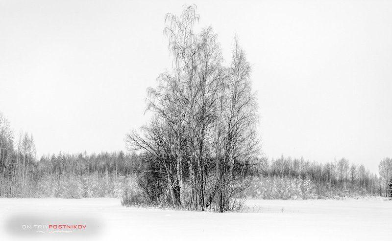 Зима, Пейзаж, Природа, Снег, Черно-белое Минимализма пост.photo preview