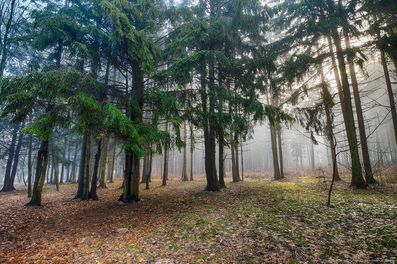 весна март деревья лесопарк медвежино облака беларусь сухарево запад-3 туман рассвет парк градиент тональная перспектива hdr ель 2017 Весенним утром в паркеphoto preview