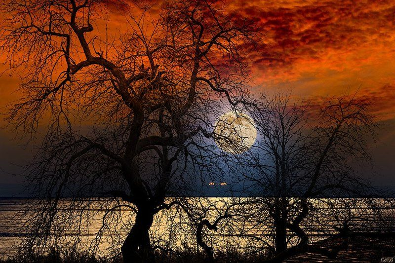 art, collage, color, colors, color image, concept, conceptual, composing, digital, digital art, digiart, editing, moon, moonlight, photography, photo collage, red, sky, surreal, surrealism, tree, trees, Scene from a Dreamphoto preview
