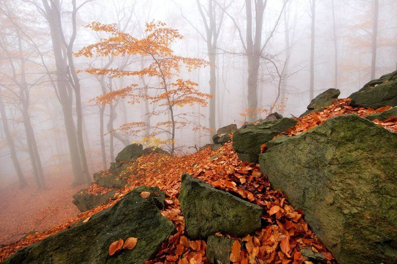 Czech republic, Ore Mountains, autumn, rocks, beeches, fog, mist, colors Autumn in the Forestphoto preview