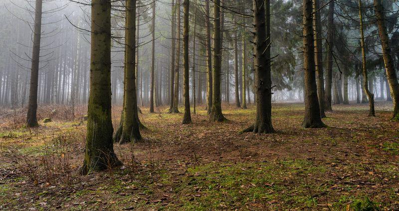весна март деревья лесопарк медвежино облака беларусь сухарево запад-3 туман рассвет парк градиент тональная перспектива hdr ель 2017 Туман в хвойном массивеphoto preview
