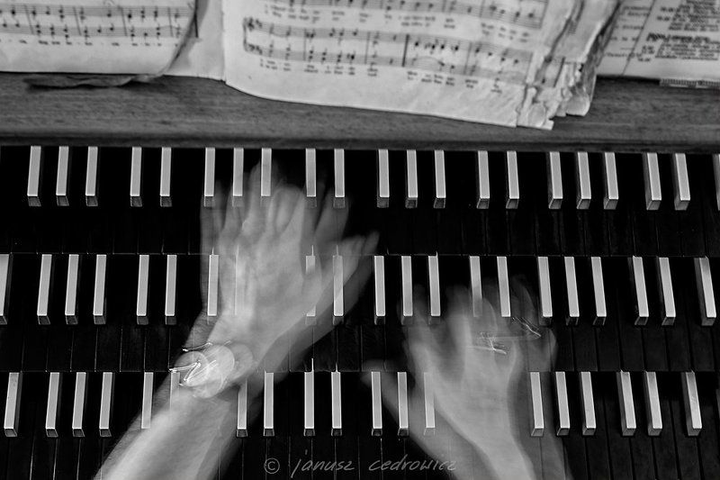 Abstract, Art, Black & white, Cathedral, Church, Concert, Instrument, Keyboard, Live, Music, Musician, Organ, Pipe organ pipe organphoto preview