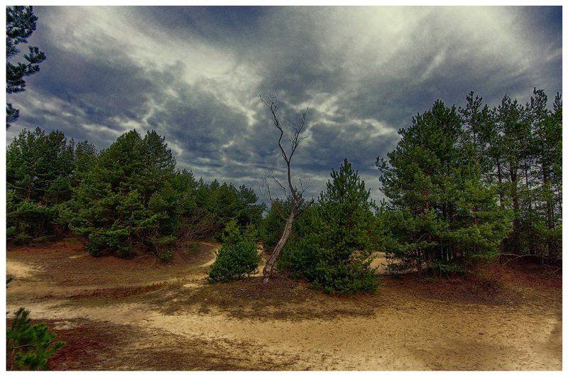 Сухое дерево.photo preview