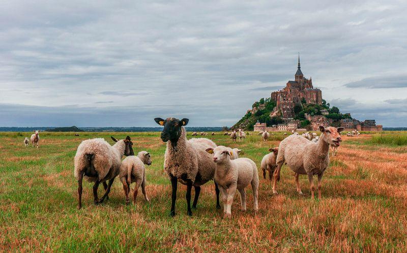 Mont Sen Michel и барашки photo preview