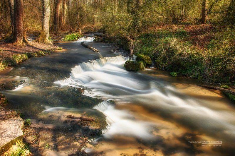 reserve, nature, river, trees, rpowroznik, Roztocze lights & shadowsphoto preview