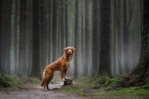 В туманном лесу