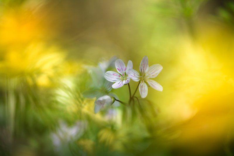 Весны прекрасные мгновенья photo preview