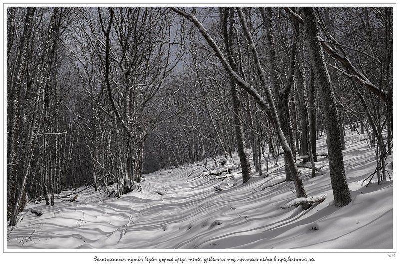 крым, апрель, весна, ай-димитрий, лес, снег, зима, анатолий покровский Заснеженным путём ведёт дорога средь теней древесных под мрачным небом в предвесенний лесphoto preview
