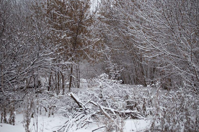 снег, зима, белое, природа photo preview