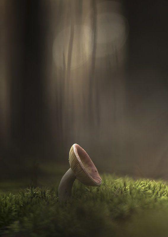гриб, свет, осень, смотреть, алиса, мох, лес, воронеж, геннадий мещеряков Алиса смотрела на гриб...photo preview