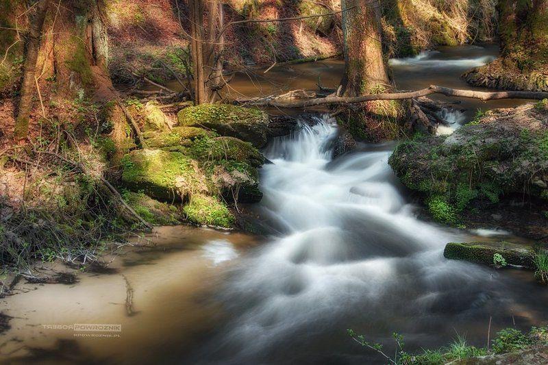 Sopot, river, nature, reserve, rpowroznik, Roztocze lights & shadowsphoto preview