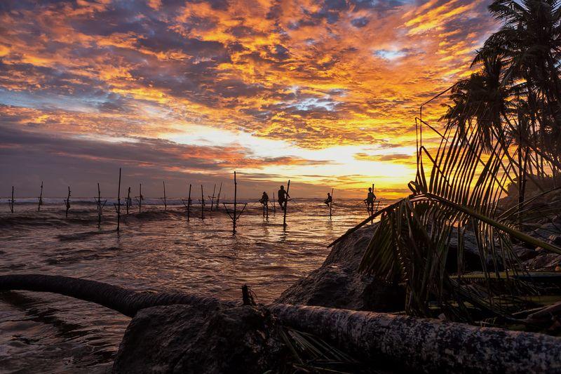 шри-ланка, закат, остров, окена, рыбаки, облака, небо, солнце, Вечерний клевphoto preview