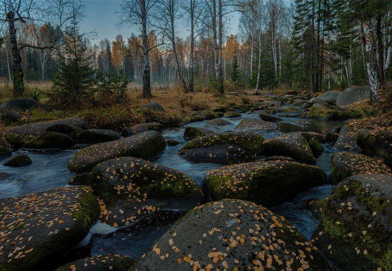урал, осень, октябрь, северка Осенние листьяphoto preview