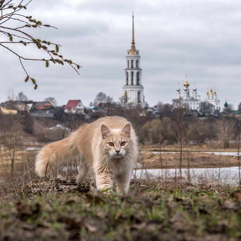 кот кошка шуя колокольня разлив весна Хищникphoto preview