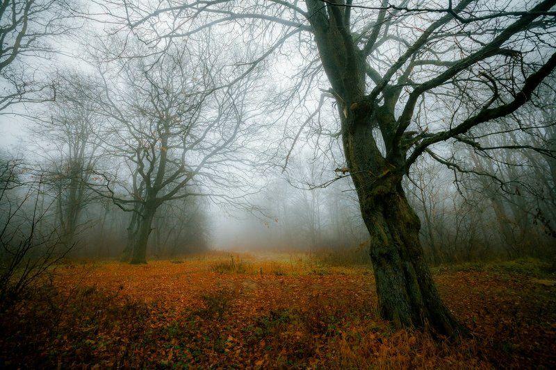 любуж, лес, осень, деревья, туман Туманный Любужphoto preview