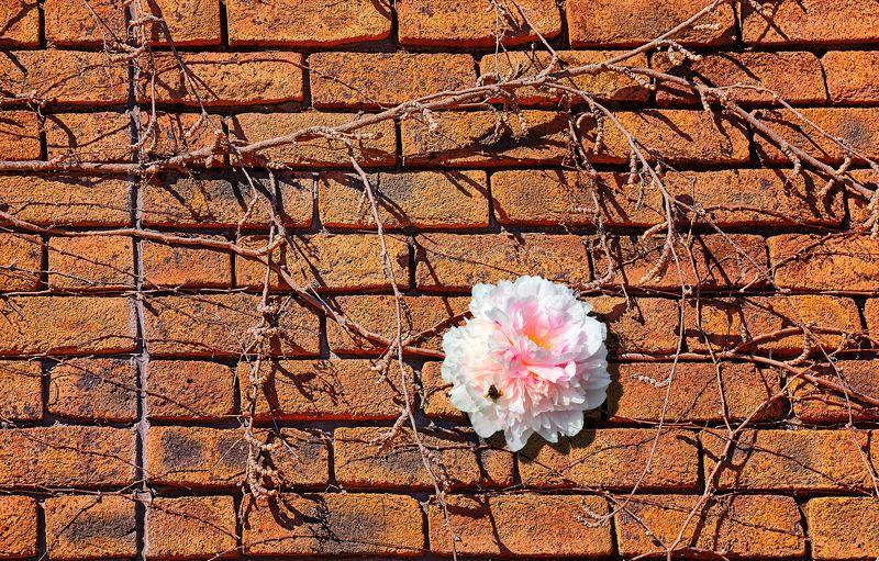 стена Живое и мертвоеphoto preview