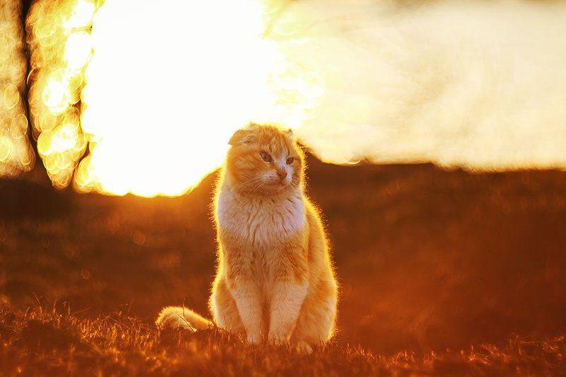 кот огненныйphoto preview