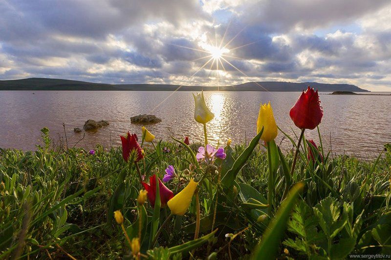 крым, опук, пейзажи крыма, весна, озеро, соленое озеро, кояшское озеро, фотограф крым, фотограф ялта, пейзаж, солнце, море, пляж, волна Весна в Крымуphoto preview