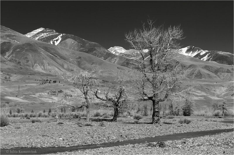 landscape, scenic, nature, view, black and white, mountains, snow, steppe, poplar, tree, Chagan-Uzun, Altai На земле корявых тополейphoto preview