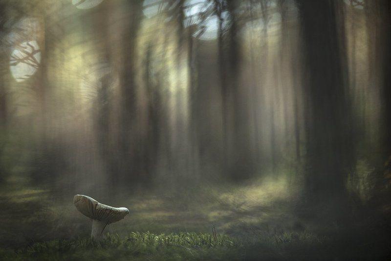 Осени тишина...photo preview