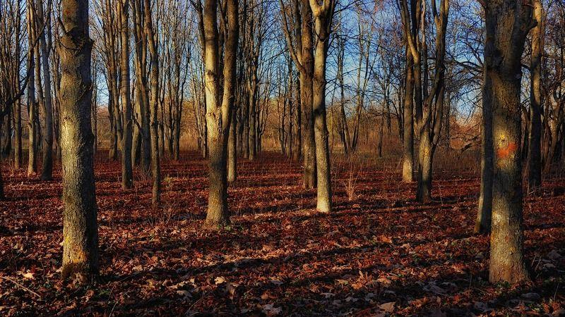 осень вечер закат природа пейзаж последнее тепло Осень. Прощальное тепло...photo preview