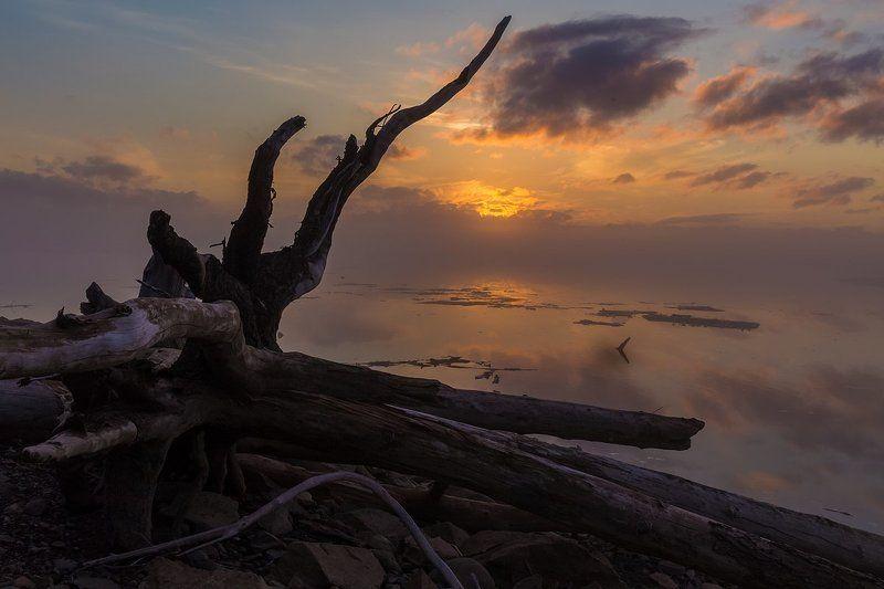 путорана, курейка, светлогорск, курейское водохранилище, красноярский край, коряга, север, туман Монстры весныphoto preview