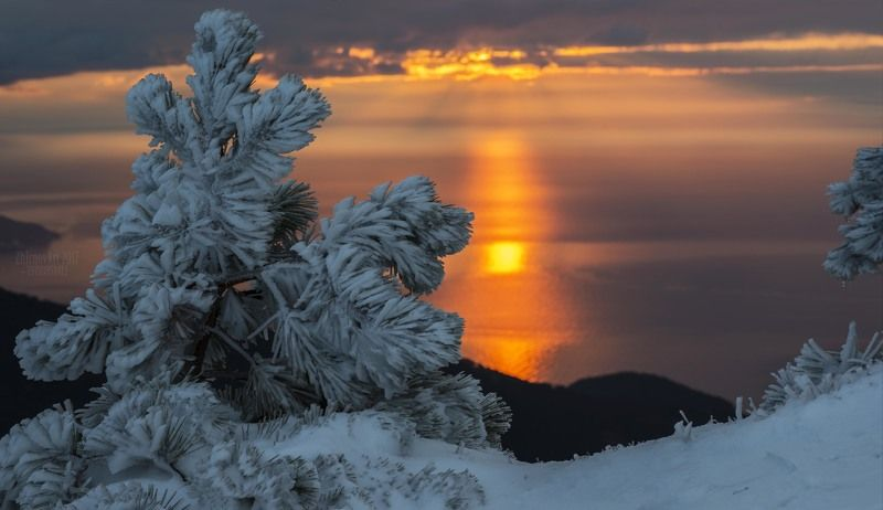 снег, восход, сосны в снегу,утро Последний снег на Ай-петриphoto preview