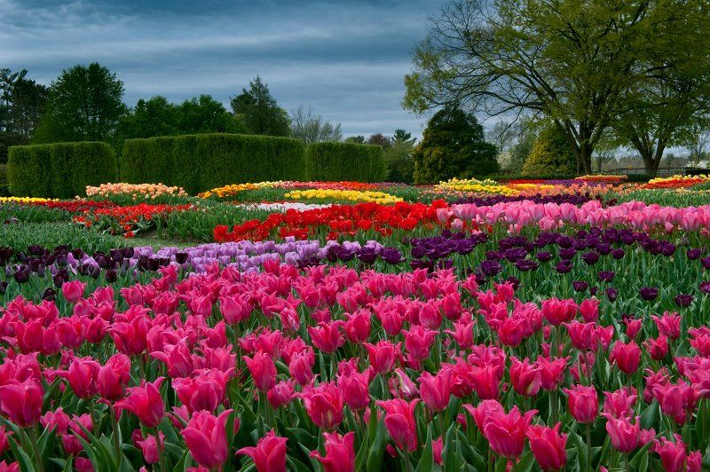 Tulip Gardensphoto preview