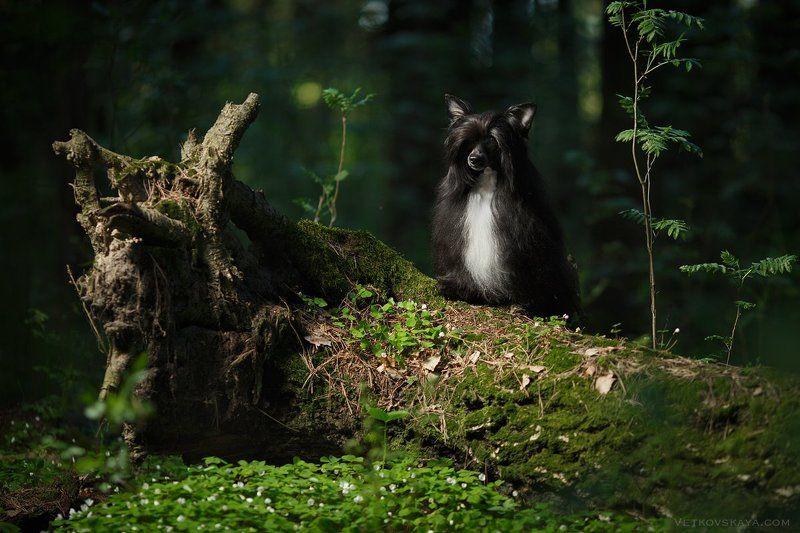 собака, лес, пуховка, мох Лесовичокphoto preview