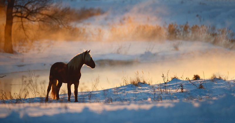 лошадь, мороз, зима, река, снег, туман Мороз и солнцеphoto preview