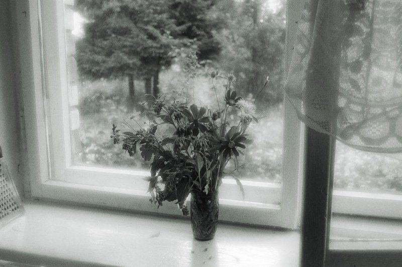 окно, цветы, соснов На окнеphoto preview